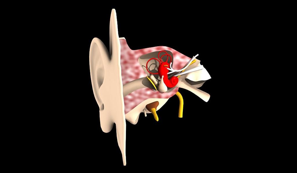 Beskyt din hørelse med vitaminer og mineraler