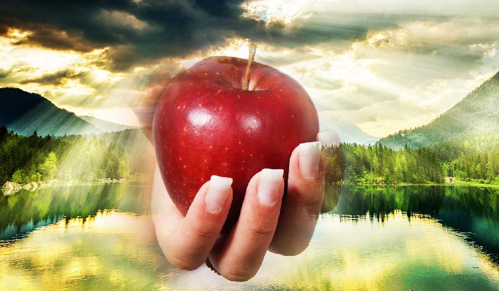 Æbler beskytter kroppen mod stråling